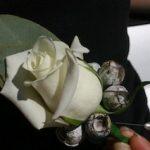 Buttonhole - Rose & Eucalptus
