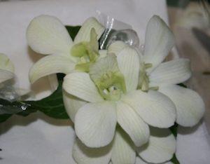 Wrist Corsage Fresh - Orchids