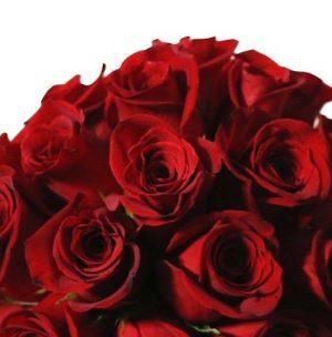 24 Roses Red Roses Box