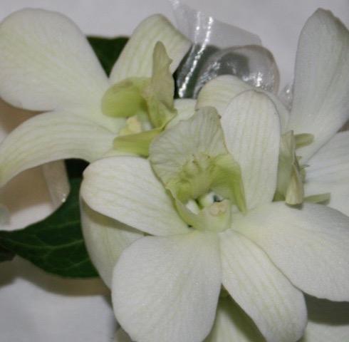 Z-A Find your Orchids Colour