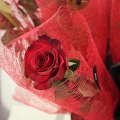 Single Rose Wrapped